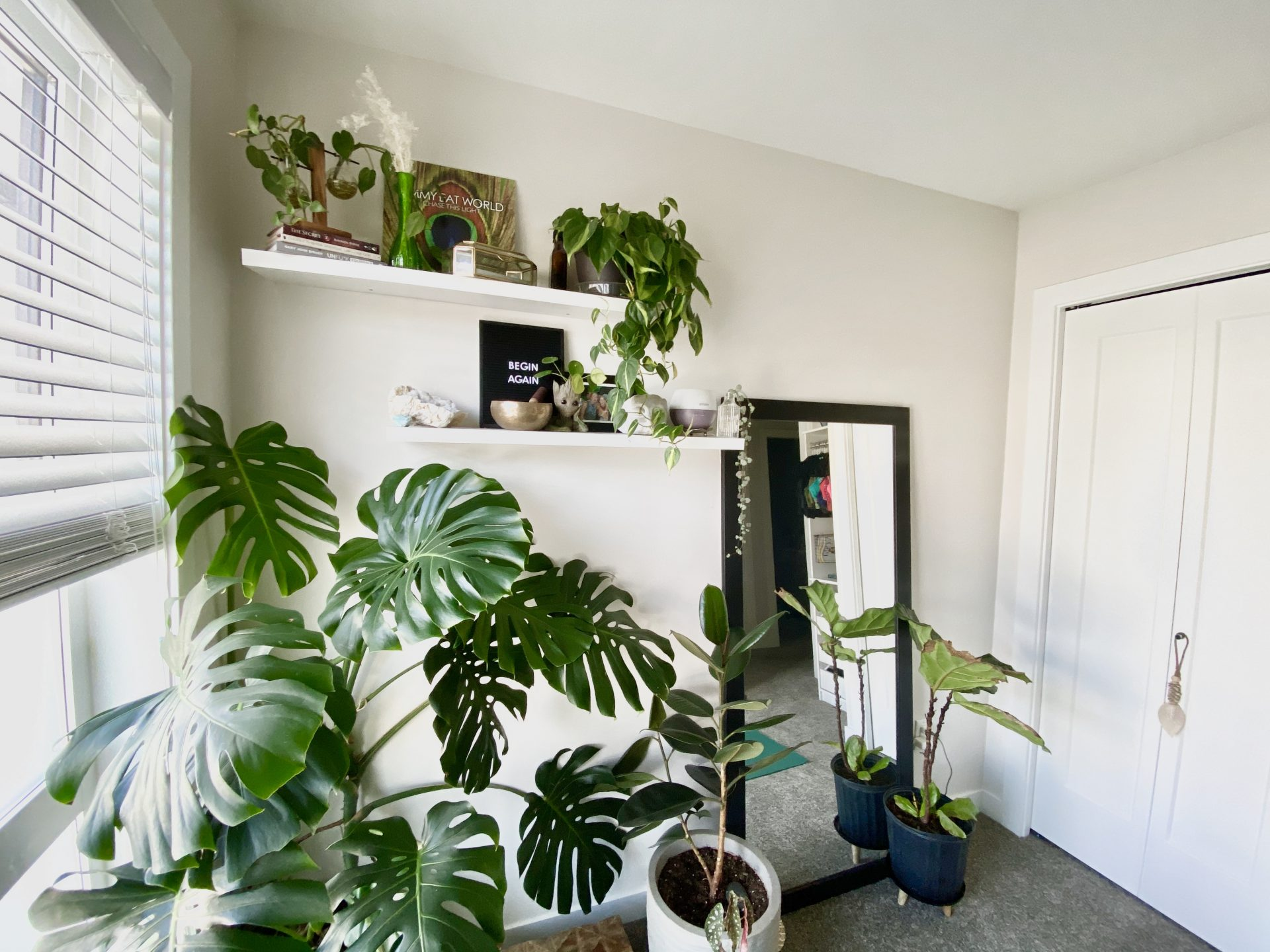 A room with many plants, two white floating shelves on the wall holding nic nacks